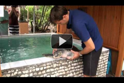 Video : injured turtle rescued (Juno)