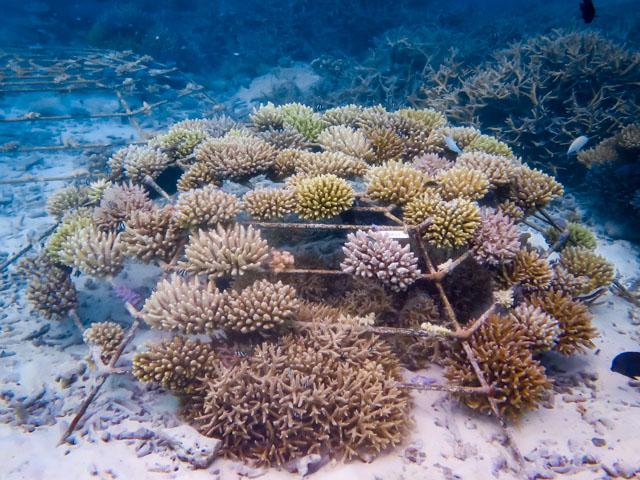 Reefscapers coral frame KH0830 (20-Mar-15)