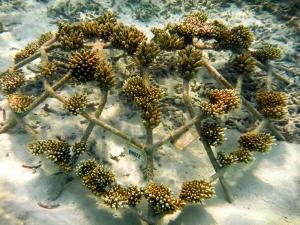Heart-Shaped Coral Frame [KH1022] (Join our Coral Frame Sponsorship Programme !)