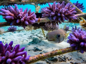 Coral frames and marine life – Marine Savers Maldives (Welcome to our Collection of Coral Frame Photographs)