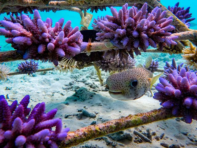 Coral frames and marine life - Marine Savers Maldives