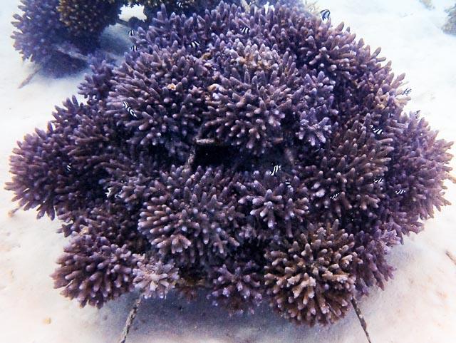 Reefscapers coral frame LG0600 (08-Dec-14)