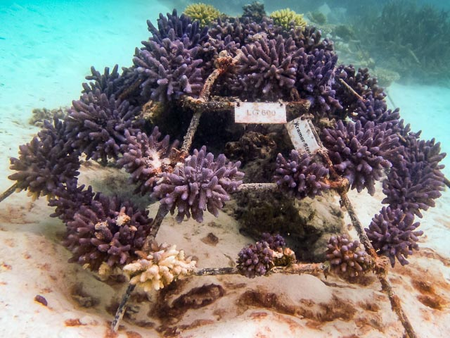 Reefscapers coral frame LG0600 (22-Jun-12)