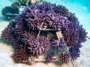 (Welcome to our Collection of Coral Frame Photographs)