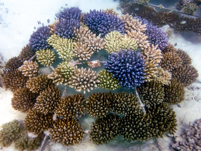 Reefscapers coral frame LG1014 (12-Aug-14)
