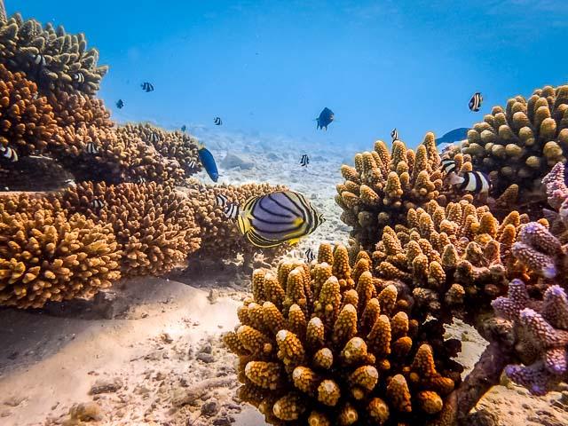 Reefscapers frames - Marine Savers Maldives