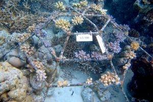frame.LG598 (Coral frame monitoring)