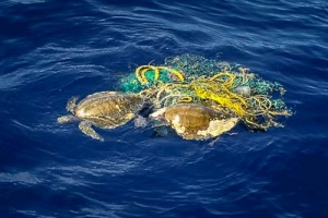 1. Isabella & Sofia – entangled in a ghost net (Volpi family photo)-2 (Our Maldivian Sea Turtle Conservation Programmes)