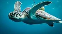 14 Reared Sea Turtles Released Into The Wild !