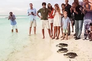 Turtle Release on Kuda Huraa Beach