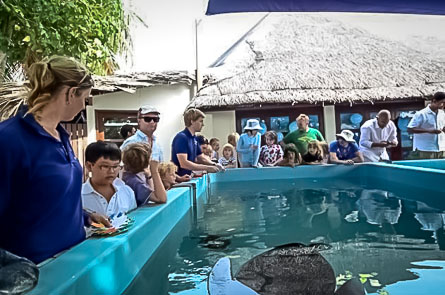 Turtle Day Celebrations at the Pool
