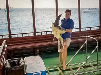 Eduardo (male Olive Ridley turtle) rescued from a 'ghost' fishing net
