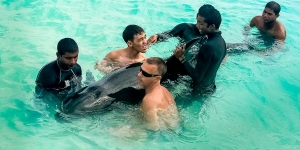 whale-rescue-6-1777 (Marine Savers Photo Galleries)