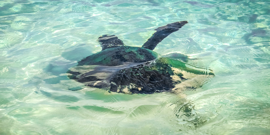 Igor swimming free once again