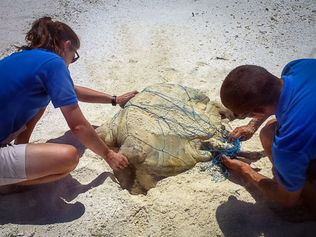 Kihaadhoo - freeing the entangled Olive Ridley turtle