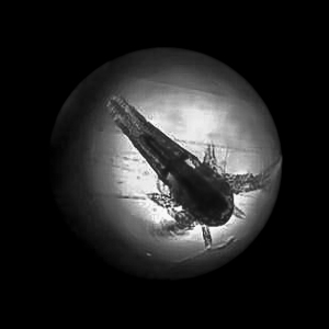 Fish Lab – Artemia brine shrimp (1 day old) [LG 2013.05]