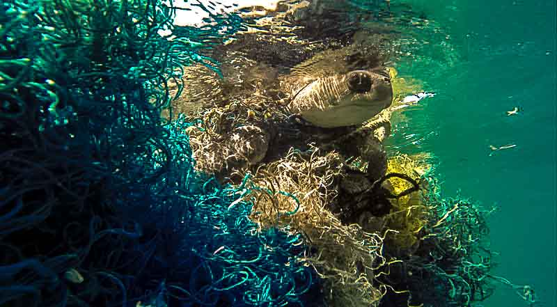 Turtle entangled in ghost netting