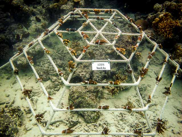 Reefscapers Coral Frame LG1014 in 2011