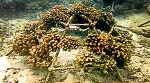 Coral Propagation Program – September