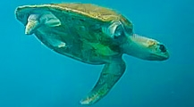 Turtle Conservation News