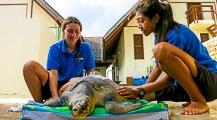 Landaa Giraavaru Turtle Rescue Roundup