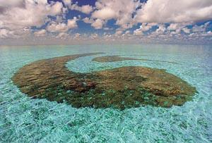 Coral Yin Yang in Landaa Giraavaru lagoon