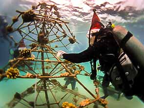 Xmas Tree Coral Frame Maintenance