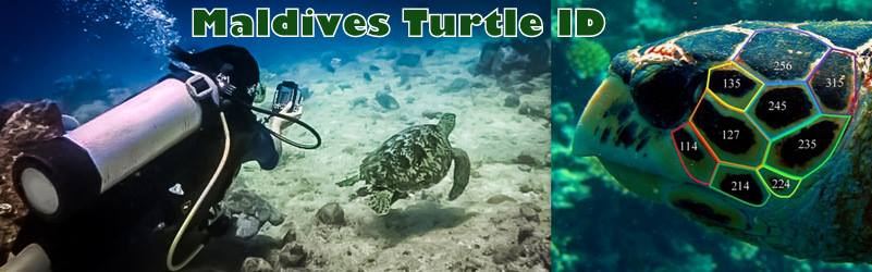 Visit our Maldives Turtle ID group on Facebook