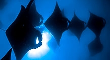Gentle Giants Expedition With The Manta Trust