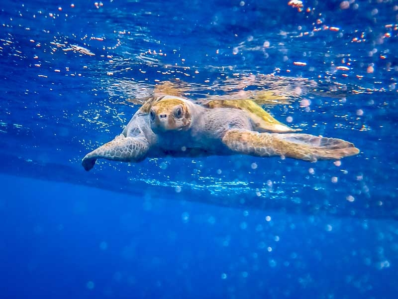 Maldivian Sea Turtle Conservation Programme