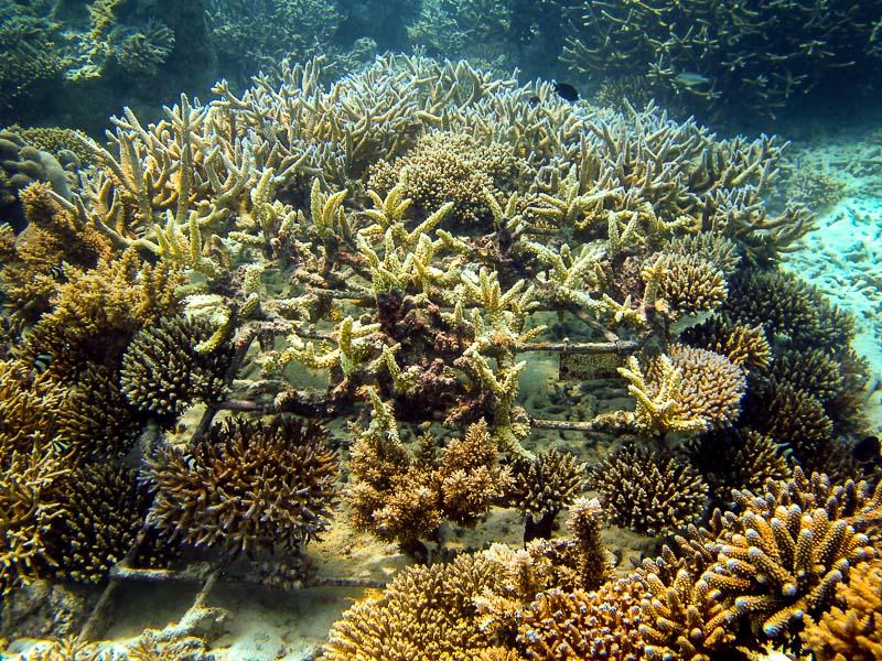 Coral Frame - LG487 (LG0487H00130207)
