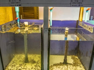 Fish Lab – tragedy strikes our clownfish tanks [LG 2014.02]-2 (Life & Death at the Fish Lab)