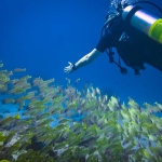Diver with fish school