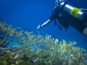 Diver with fish school (Life & Death at the Fish Lab)