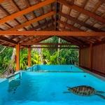 Turtle rehabilitation pools