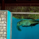 Turtle viewing window - one of our patients