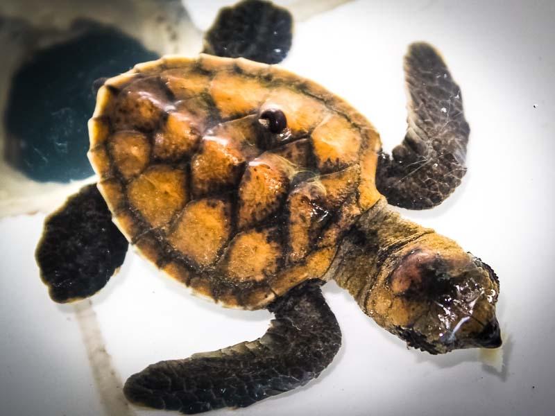 Kuda Huraa Turtle Programmes