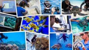 Marine Savers – Seamarc marine biologists Maldives – employment vacancies (Employment Opportunities in the Maldives at Marine Savers)