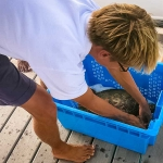 Nao the Hawksbill turtle arrives from Gili Lankan Fushi