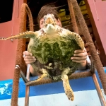 Nao the rescued Hawksbill turtle - big release