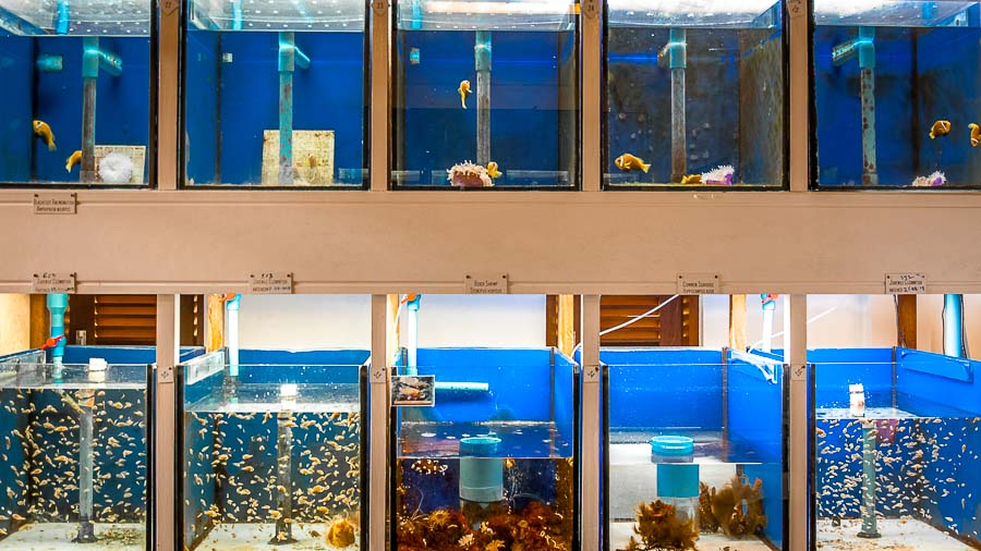 Fish Lab - clownfish breeding tanks