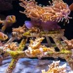 Marine aquarium (Kuda Huraa) - mini coral frame