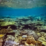 Guided Snorkel Adventure - reef