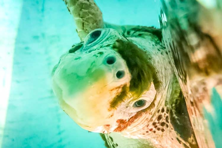 Sea Turtle Conservation Programme