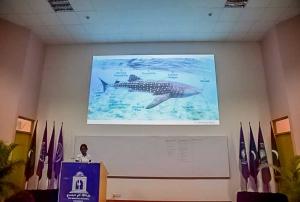 Whale Shark Workshop, Malé Maldives (Batfish Breeding, Camera Traps and a Whale Workshop)