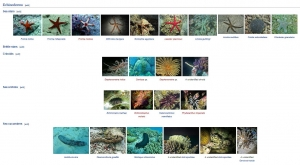 Wikipedia Page – Marine Wildlife of Baa Atoll (July Updates from our Marine Discovery Centres)