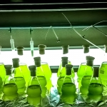 Fish Lab - Algae production – Starters and Masters