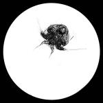 Fish Lab Microscope - Nauplii of Benthic Copepod