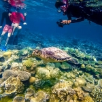 Hawksbill Turtle Sighted at Makunudu