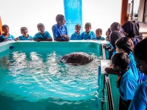 Maalhos School visit – turtle rehabilitation pools (Island Diary – September)